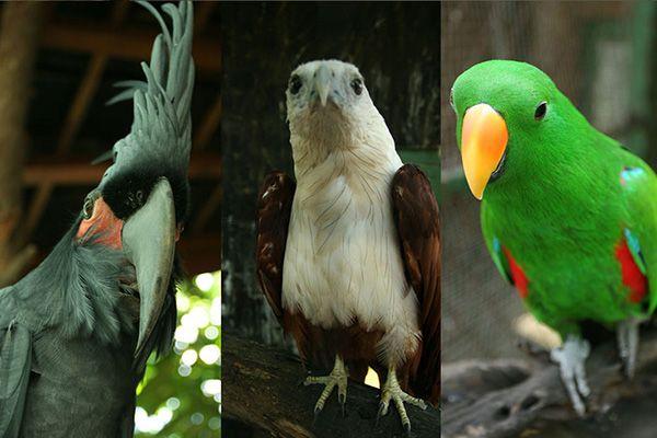 Gili Meno Bird Park (Taman Burung)
