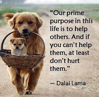 Our prime puspose in this life is to help others.  And if you can't help them, at least don't hurt them.