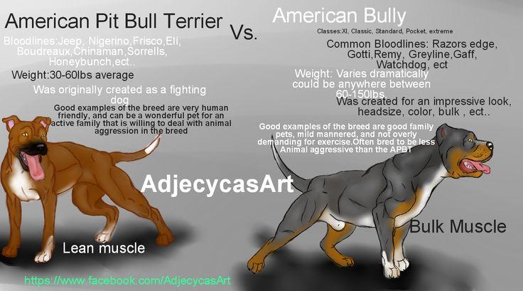 American Bully Vs American Pit Bull Terrier Bully