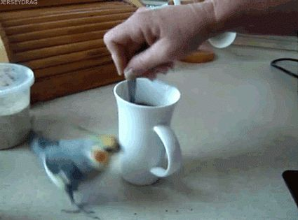 Funny Caffeine Bird Animated Gif - I'm not sure if the bird loves it hates the sound, but it sure is making it clear that it notices!