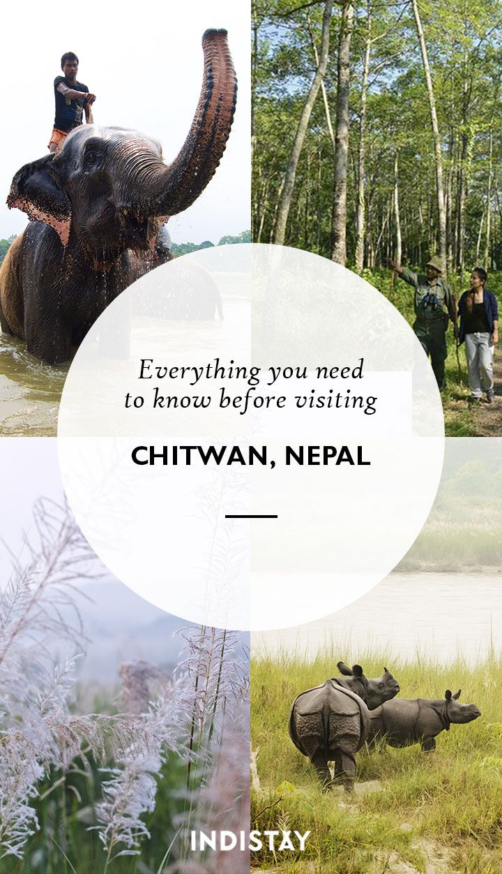 Everything you need to know about visiting Chitwan National Park, Nepal
