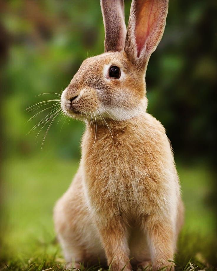 Pin By Mac Technicians On Animals In 2020 Animals Raising Rabbits Rabbit Pictures