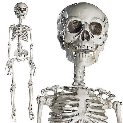 LIFE-SIZED Realistic Posable Skeleton Prop 5ft, HALLOWEEN DECORATION