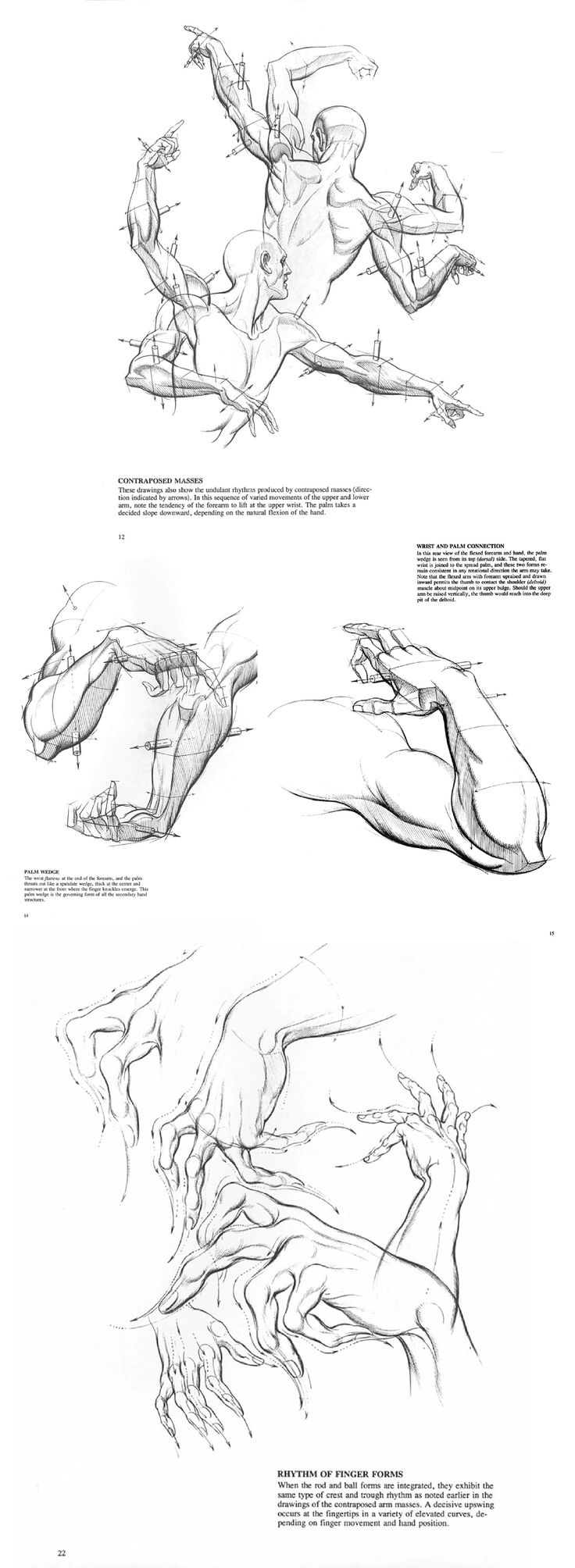 45 best Burne Hogarth images on Pinterest | Human anatomy, Drawing ...