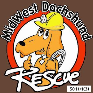 Midwest Dachshund Rescue is totally committed to rescuing, rehabilitating and re-homing needy dachshunds and dachshund mixes  throughout the Midwest.