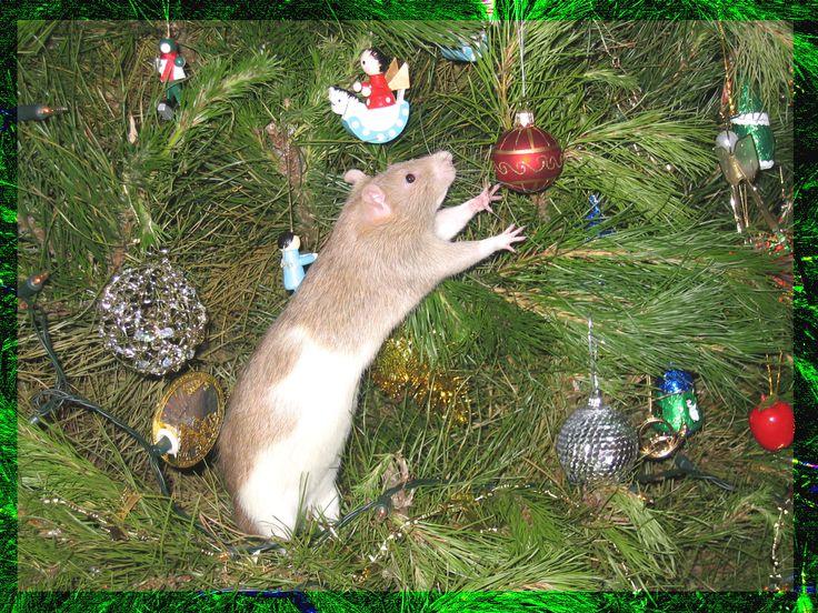 его картинки новогодних мышей и крыс рынок