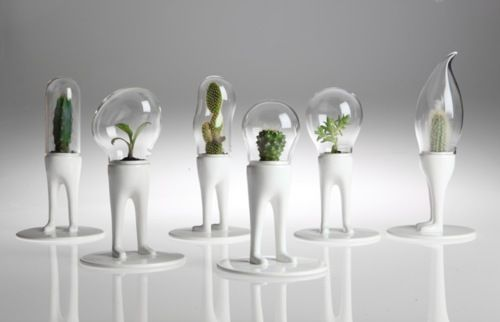 Doomsai by Matteo CibicMinis Terrariums, Matteo Cibic, Green Interiors, Cacti, Gardens Design Ideas, Plants, Glasses Dome, Flower Pots, Planters