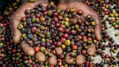Co se skrývá za nízkou cenou banánů? Aproč fair trade káva chutnálépe?