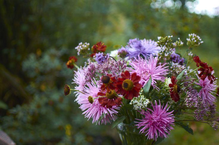 Květinová vazba ze zápleváků (Helenium), letních aster, sadce (Eupatorium) a mavuní