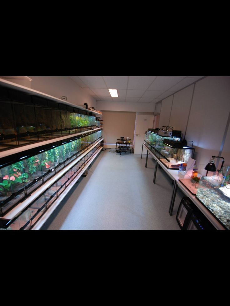 227 Best Images About Reptile Room Ideas On Pinterest