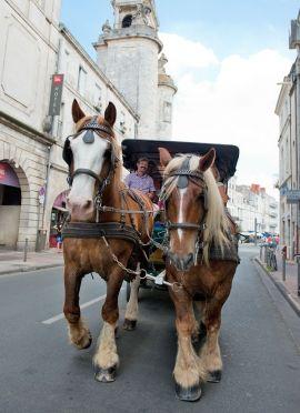 La ville... en calèche | La Rochelle Tourisme - hotel la rochelle, location la rochelle, chambres d'hôtes la rochelle, hôtels La Rochelle