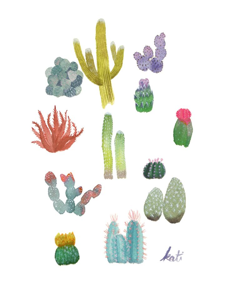 cactus print cacti party cactus and succulent watercolor