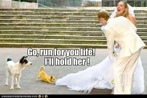 The Wedding CrashersWedding Dressses, Friends, Chihuahuas, Wedding Crashers, Funny Pictures, Dresses, Brides, Man, Giggles