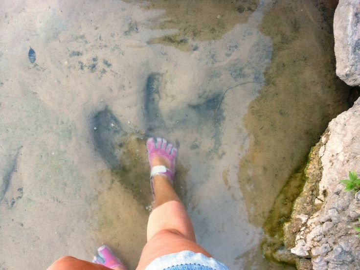 Dinosaur Valley National Park: preserved dinosaur tracks in the riverbed! Very cool place in Texas
