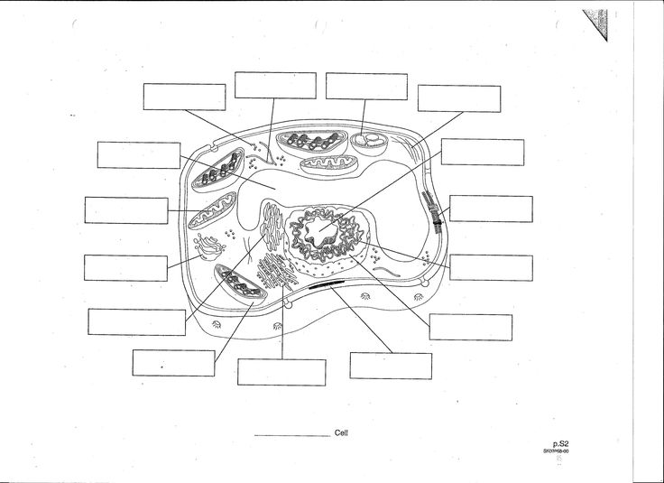 Blank Plant Cell Diagram Worksheet Fresh 10 Cell Drawing ...