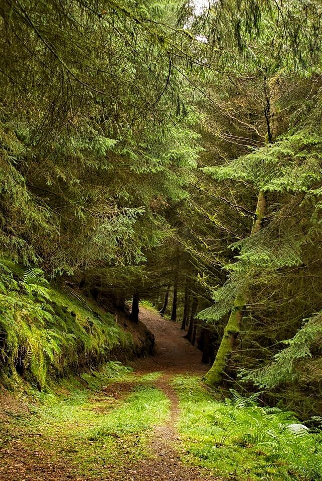 Forest Road Nature Photography Landscape Beautiful Nature