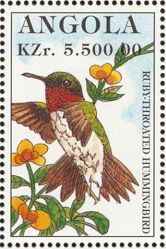 Ruby-throated Hummingbird - Angola
