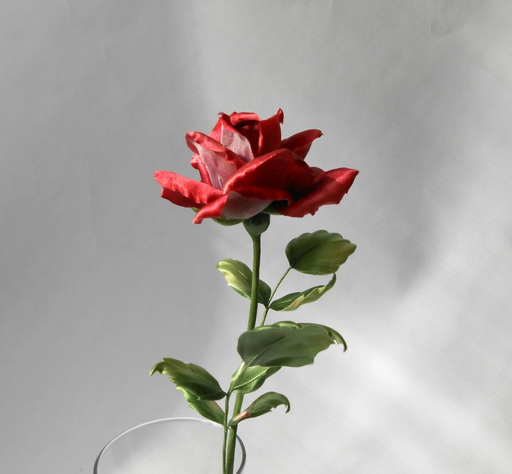 rose Black Magic