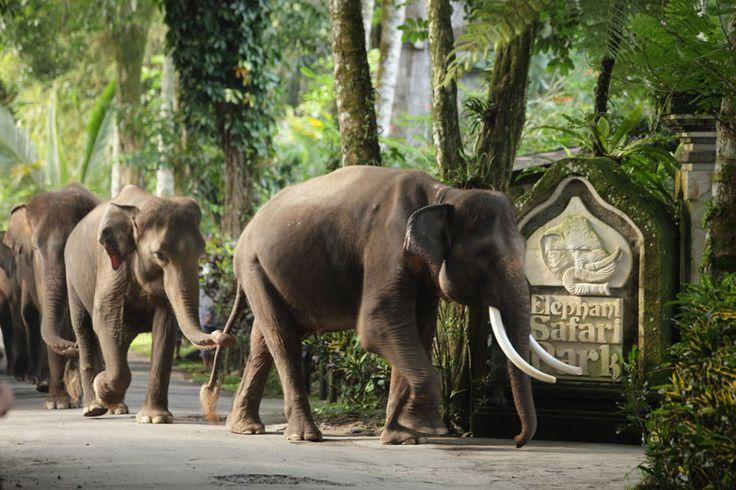 Bali Elephant Safari Park