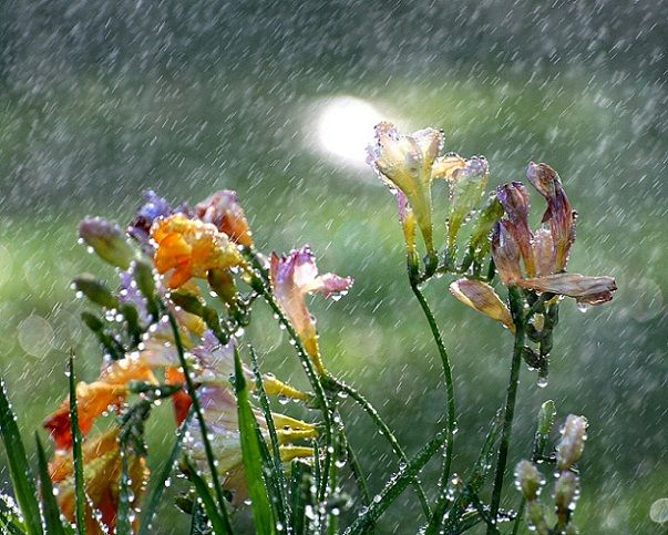 Beautiful flower photos. Freesia are my favorite!