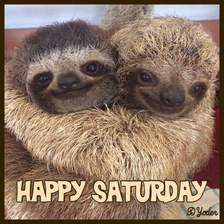 Happy Saturday Sloths | Animal hugs, Cute baby sloths, Cute animals