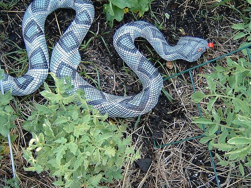 blow up snake to keep birds away - 16 Best Images About Keep Birds Away! On Pinterest Gardens, The