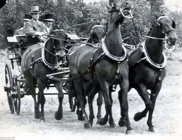 1974:Prince Philip drives the Queen's team of part-bred Cleveland bays to a Balmoral Dog ...