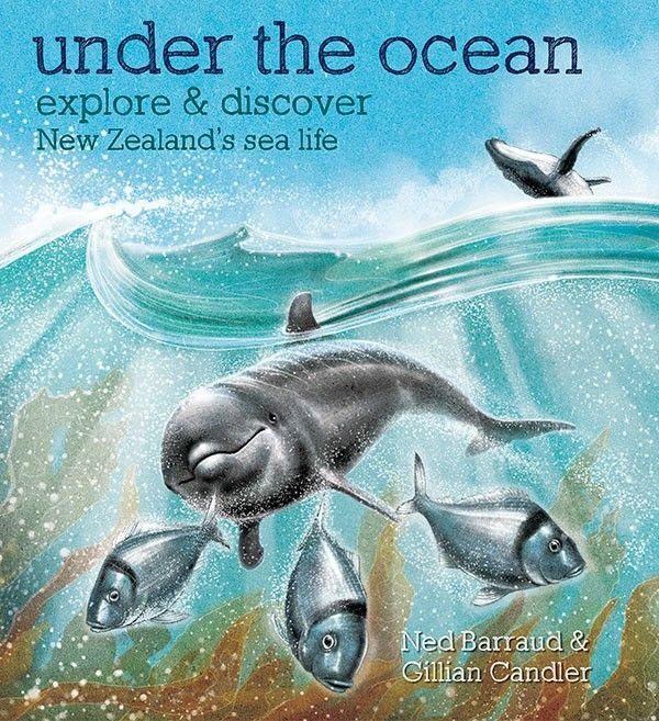 Under the Ocean by Gillian Candler, illustrated by Ned Barraud, published 2014