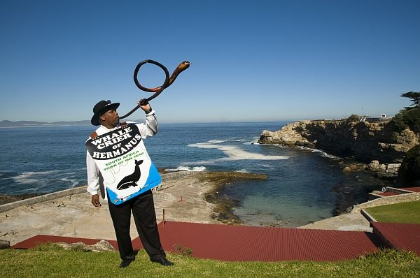 Hermanus in Western Cape, is the only place in the world to have its own whale crier!     What's his job? To alert everyone of the whales' whereabouts, so you can actually see them from afar! #CoxandKings