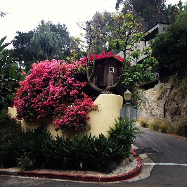 Mother Earth alive and well in the Hollywood Hills #LA. And yes that is a house in a tree..I think. 10387770_1454845471425527_921442872_n