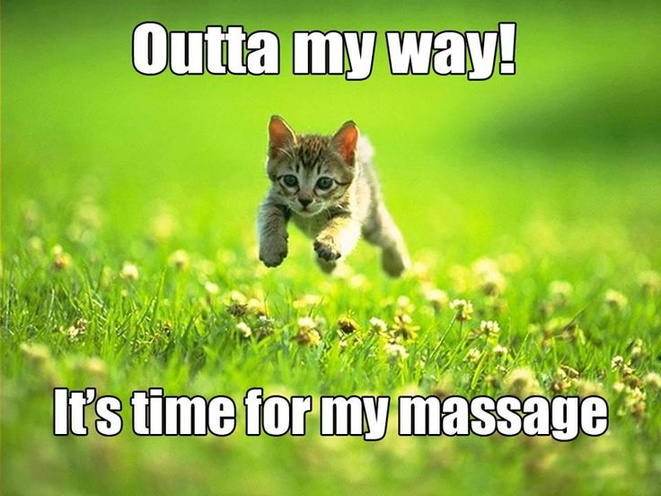 Outta my way!  It's time for my massage!