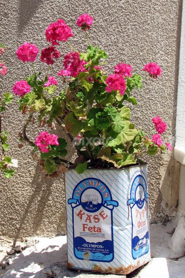 Pink Geraniums in a Feta Tin, Naxos Island, Cyclades, Greece - My mother reuses metal food containers, just like this, for her flower pots as well. The Greeks were recycling early on without even knowing it!  Love the look of these kind of flower pots - the natural plant inside pop art advertising containers.