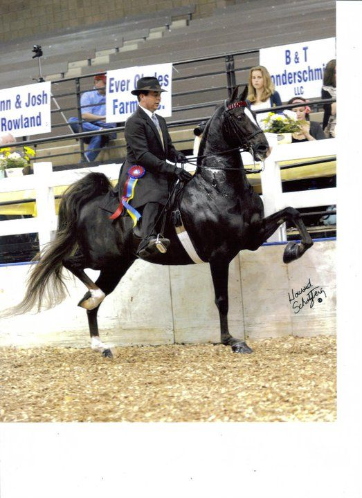 The Road Less Traveled...American Saddlebred