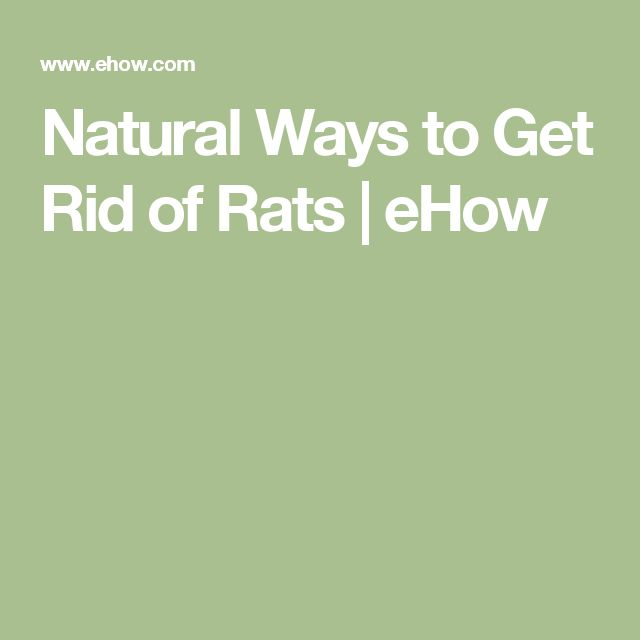 how to get rid of rats sims 4