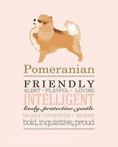 Pomeranian Dog Breed print illustration from Sirocco Design http://www.siroccodesign.co.uk/collections/dog-breed-prints/products/dog-breed-print-pomeranian