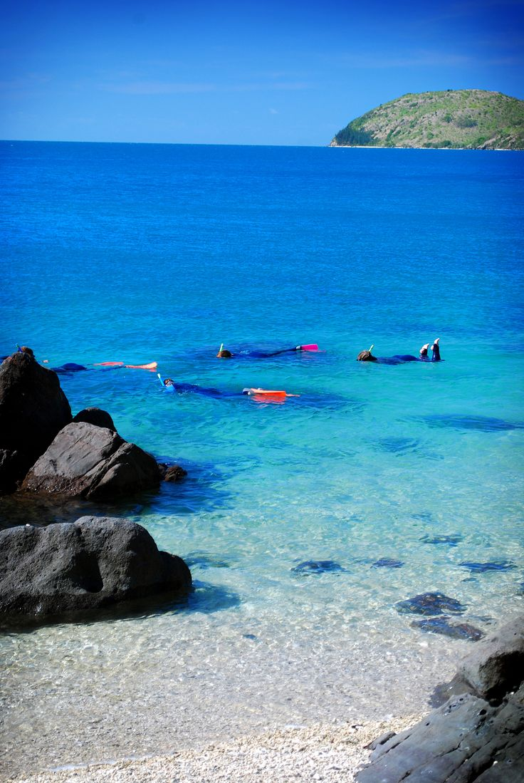 #daydreamisland #whitsundays #tropical #island #paradise #snorkel #greatbarrierreef  http://www.daydreamisland.com/ #cruisewhitsundays #awesomewhitsundays