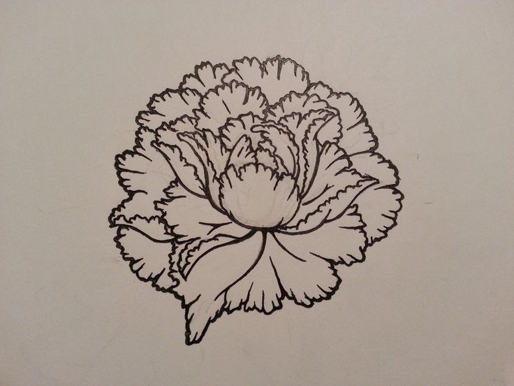"""Peony Tattoo Outline   """"With their lush, full, rounded bloom, peonies embody romance and prosperity and are regarded as an omen of good fortune and a happy marriage."""""""
