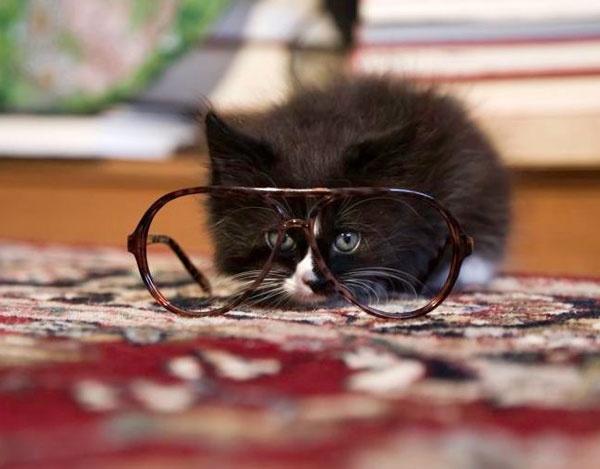 kitten glasses: Hipster Cat, Animal Lovers, Kittens Glasses, Adorable Creatures, Meowoopurdi Kittiesoo, Cutest Pet, Crazy Cat, Big Eye, Furry Friends