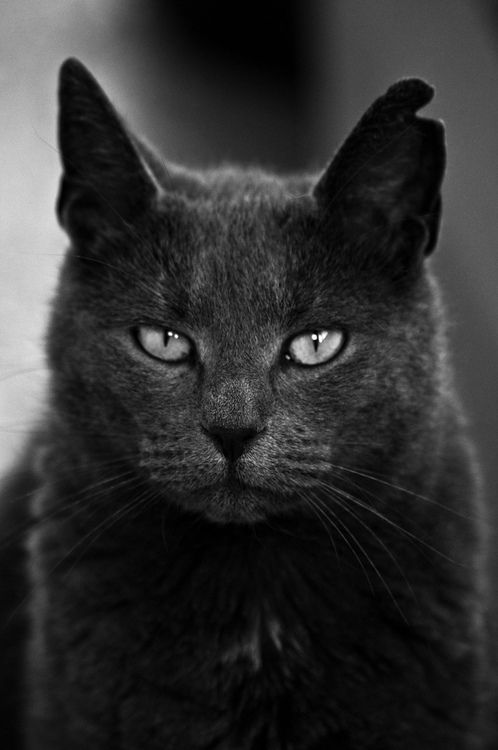 Photogenic felines || #Cat #portrait || A•