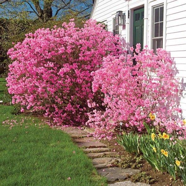 5 Giftige Pflanzen Fur Katzen Die Sie Meiden Sollten Wohnideen Und Dekoration Giftige Pflanzen Pflanzen Garten Pflanzen