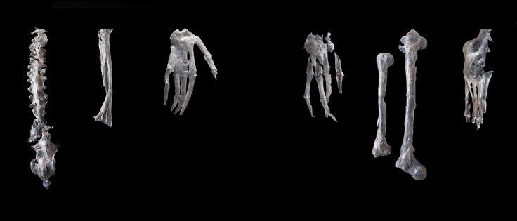 Op Sectie-C: Het Onbekende Bekende, door Anniek Mol. Een project over jongen mensen die door hun lichaam in de steek worden gelaten.