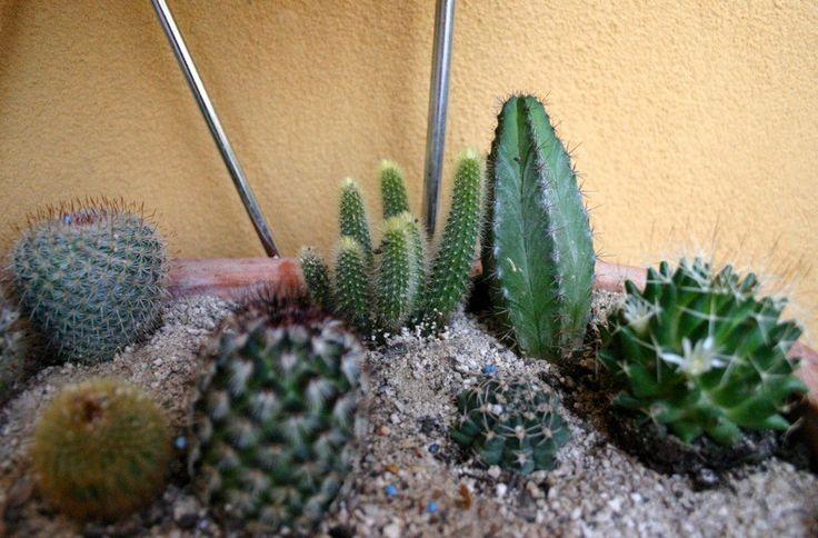 Cactus Potting Soil – Proper Planting Mix For Cacti Plants 400 x 300