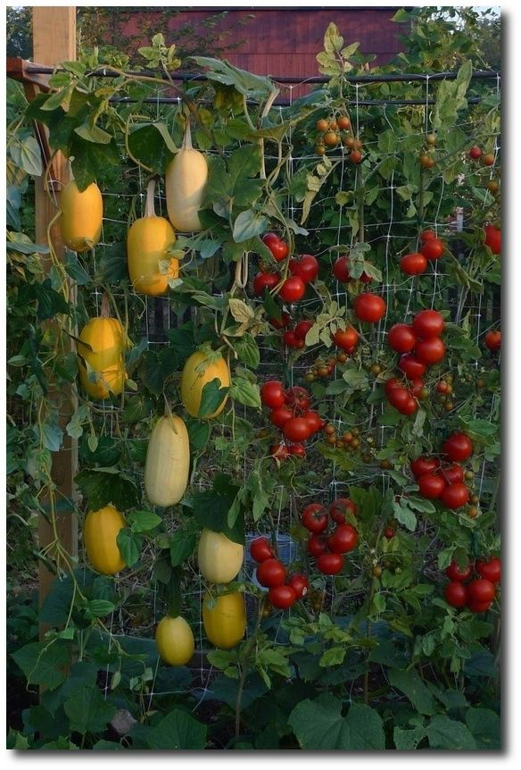 Best 25 Vertical Vegetable Gardens Ideas On Pinterest