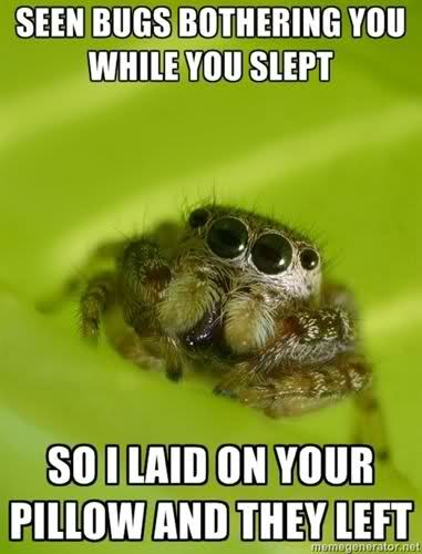 """I don't know if that's scary or adorable... it's eyes say """"love meeee!"""" But IT says """"I'm still a spider and I'm creepy."""""""
