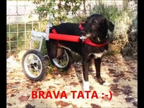 The Tata-mobile! Guarda come va! / Here's the Tata-mobile! She's got wheels! :)