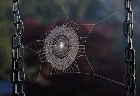 Spider Web caught beautifully by the photographer...