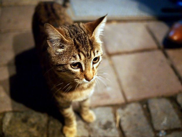 History of cats in Istanbul (replete with gratuitous cat photos of course!)