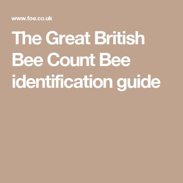 The Great British Bee Count Bee identification guide