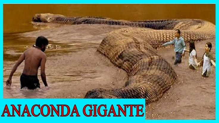 Anaconda Gigante Grande De Serpiente Pit 243 N Amazon