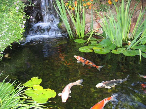 Diy koi fish pond ideas for the home pinterest for Homemade pond ideas